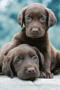 Dogs | Animal Pictures | Cutest Paw
