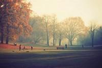 c o l o r + c u r i o s i t y / autumn autumn autumn !