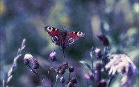 nature,butterfly nature butterfly macro depth of field 2560x1600 wallpaper – nature,butterfly nature butterfly macro depth of field 2560x1600 wallpaper – Butterflies Wallpaper – Desktop Wallpaper