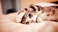 cats animals beds kittens golden eyes - Wallpaper (#1182998) / Wallbase.cc