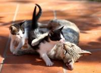 Tutte le dimensioni |Ciapett coccola i figli di Tuzzidda | Flickr – Condivisione di foto!