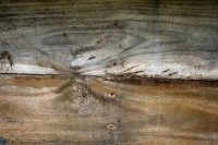Texture Download: 1-3 real wood textures free download