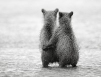 Adorable Bear Photography from Russia - My Modern Metropolis