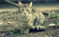 animals,cats cats animals pets 1920x1200 wallpaper – animals,cats cats animals pets 1920x1200 wallpaper – Cats Wallpaper – Desktop Wallpaper