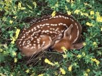 Deer / Deer Deer Deer