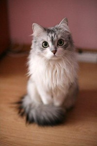 Regal kitty - Imgur