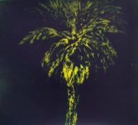 Peter Alexander » 1995-2004 Palm Trees
