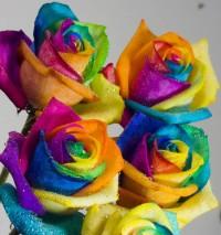 Google Image Result for http://3.bp.blogspot.com/-oRhLWn7lNJM/Tj2kBAPcS3I/AAAAAAAAAGA/ZvUdRMhNwSM/s1600/Rainbow%2BRoses.jpg