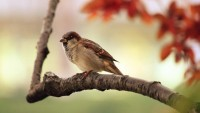 birds birds 1920x1080 wallpaper – birds birds 1920x1080 wallpaper – Birds Wallpaper – Desktop Wallpaper