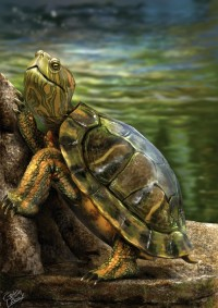 Turtle_by_crisdelara04.jpg (JPEG Image, 595×842 pixels)