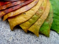 25 Amazing Autumn Photos | Vandelay Design Blog