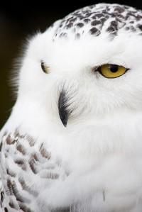 owls. / ?
