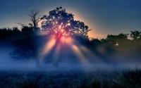trees,Sun sun trees 2560x1600 wallpaper – trees,Sun sun trees 2560x1600 wallpaper – Sun Wallpaper – Desktop Wallpaper