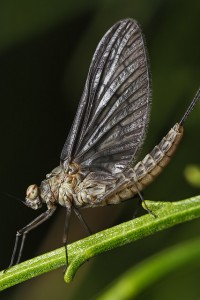 mayfly in february | Flickr - Photo Sharing!