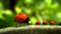 Minuscule - La vie privee des insectes (Volume 1)_part 6 - YouTube