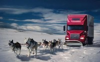 winter,snow winter snow cars humor dogs trucks wolves 1920x1200 wallpaper – Humor Wallpapers – Free Desktop Wallpapers