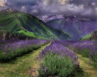 Lavender Valley by =WishmasterAlchemist