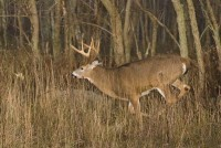 Pennsylvania Wildlife Photographer: The Whitetail Rut Explodes At Shenandoah National Park