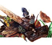 Butterflies in Habitat
