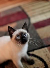 In-law's new kitten. - Imgur