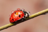 Enchanting Macro Photos of Ladybugs Caught in the Rain - My Modern Metropolis