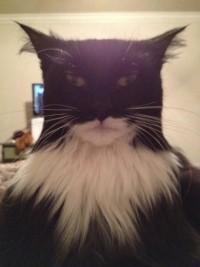 Foto Il gatto che sembra Batman - 1 di 1 - Repubblica.it
