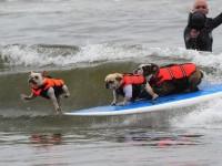 Resultados da Pesquisa de imagens do Google para http://i.i.com.com/cnwk.1d/i/tim/2011/09/26/dog_surfing_9_540x405.jpg