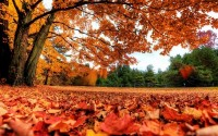 nature,landscapes landscapes nature trees autumn season red forest orange canada fallen leaves park autumn 2560x1 – nature,landscapes landscapes nature trees autumn season red forest orange canada fallen leaves park autumn 2560x1 – Canada Wallpaper – Desktop Wallpaper