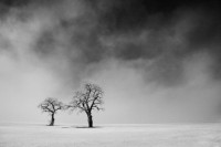 Fotoblur - Two Trees in Lifting Fog by cole thompson