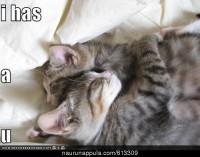 Kissantai - hauskat kuvat - Naurunappula