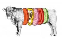 burgers,food,illustration,political,hamburger,animal-9af918d21c83c0051daf2360d8e3b5b4_h.jpg (500×322)
