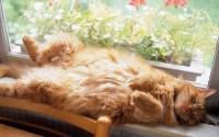 cats,animals cats animals 1680x1050 wallpaper – Cats Wallpaper – HD Wallpapers