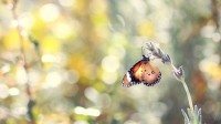 nature,bokeh nature bokeh butterflies 1680x945 wallpaper – Butterflies Wallpapers – Free Desktop Wallpapers