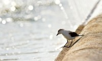 birds,bokeh birds bokeh 2000x1200 wallpaper – Birds Wallpapers – Free Desktop Wallpapers