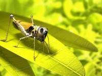 yellow,grasshopper yellow grasshopper 3d 2560x1920 wallpaper – 3D Wallpapers – Free Desktop Wallpapers