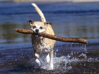 dogs,animals animals dogs 1600x1200 wallpaper – Dogs Wallpapers – Free Desktop Wallpapers