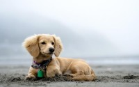 animals,beach beach animals dogs outdoors pets 2560x1600 wallpaper – Dogs Wallpapers – Free Desktop Wallpapers
