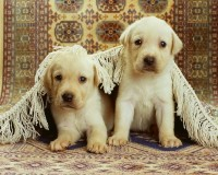 dogs dogs 1580x1264 wallpaper – dogs dogs 1580x1264 wallpaper – Pets Wallpaper – Desktop Wallpaper