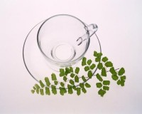 leaves cups 1280x1024 wallpaper – Tea Wallpaper – Computer Desktop Wallpapers