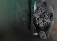 hinter jeder Ecke lauert Gefahr... - Bild & Foto von Michael Seth aus Groß- und Kleinkatzen - Fotografie (22486216) | fotocommunity