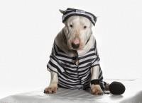 not guilty - Bild & Foto aus Hunde - Fotografie (24299233) | fotocommunity