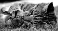 **** - Bild & Foto von Pia aus Tiere - Fotografie (21521474) | fotocommunity