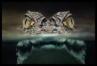 Zwei Augen - Bild & Foto von Christian Maier (amarok) aus Tiere - Fotografie (29787793) | fotocommunity