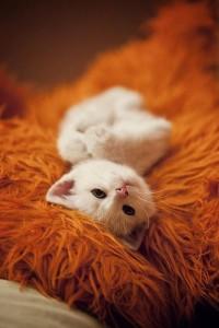 meow / meow