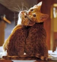 meow /