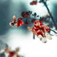 Blue Christmas hydrangea flower winter decor teal by Raceytay