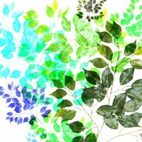 Backyard blooms :Ficus Leaves Stretched Canvas by Sreetama Ray | Society6