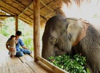 father-son-and-elephant.jpg (JPEG Image, 960 × 699 pixels) - Scaled (78%)