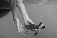 "Image Spark - Image tagged ""black and white"", ""freedom"", ""turtle"" - natashaniezgoda"