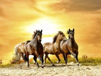 animals,horses animals horses sunlight running 1680x1260 wallpaper – animals,horses animals horses sunlight running 1680x1260 wallpaper – Horses Wallpaper – Desktop Wallpaper